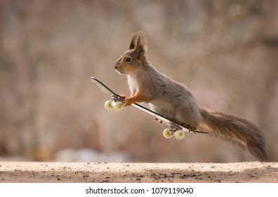 red squirrel flying on  an Skateboard