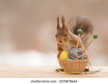 red squirrel is holding basket with knitting needles