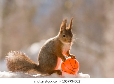 red squirrel is holding a basketball