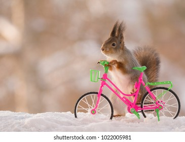 red squirrel is holding a bicycle