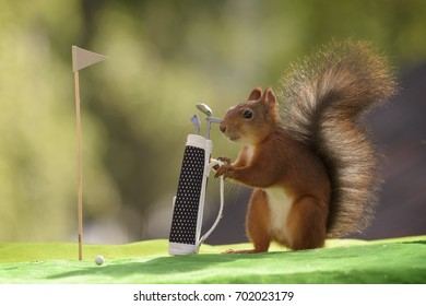 red squirrel is holding a golf bag