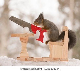 red squirrel is holding a saw with a egg and table