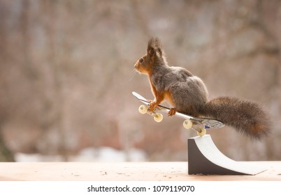 red squirrel jumping on a Skateboard in the air