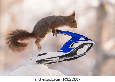 Red squirrel is jumping up with  a water scooter
