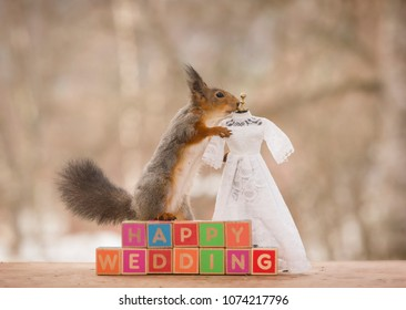 red squirrel on blocks with a wedding dress