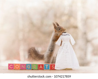 red squirrel on congrats blocks with an wedding dress