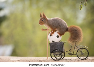 red squirrel on an cycle and an ball