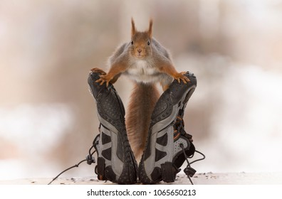 red squirrel stand in split between sport shoes