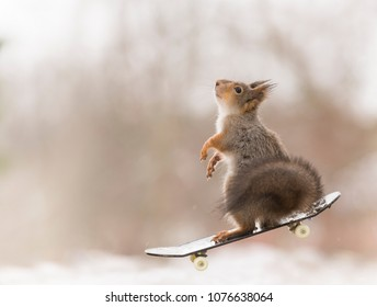 red squirrel is standing on an Skateboard in the air