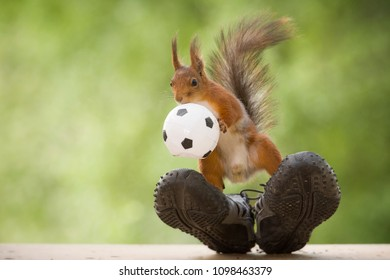 red squirrel standing on sneakers with an ball