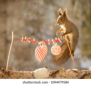 red squirrel standing on a wash line with hearts