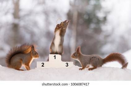 red squirrel stands on a podium  with a medal