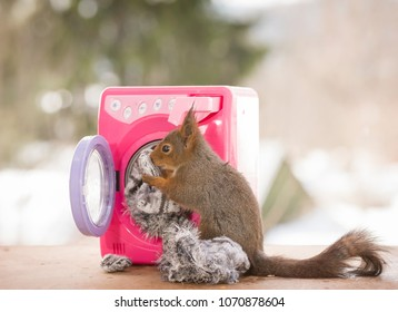 red squirrel with the wash and washing machine