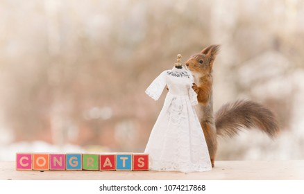 red squirrel with an wedding dress and congrats text
