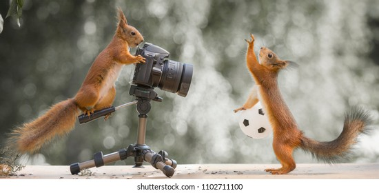 red squirrels with a camera and a ball