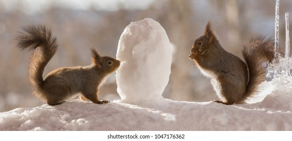 red squirrels  with an egg of snow