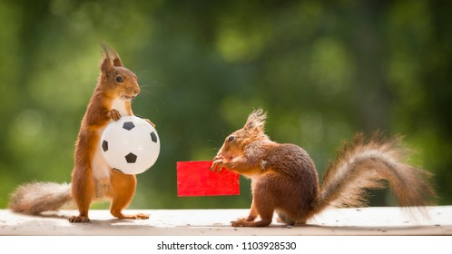 red squirrels holding a red card