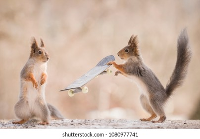 red squirrels are  holding an Skateboard