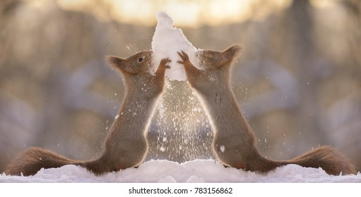 red squirrels holding a snowball