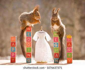 red squirrels on text blocks with an wedding dress