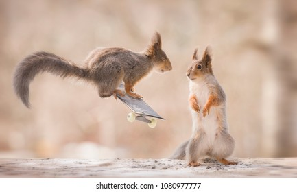 red squirrels with an Skateboard
