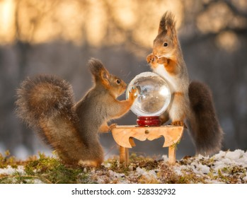 red squirrels standing with  crystal ball  and with back light