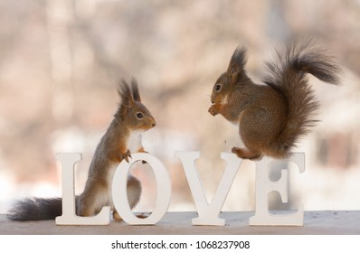 red squirrels are standing on the word love