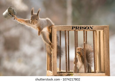 red squirrels are standing with a prison