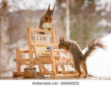 red squirrels with an weaving loom