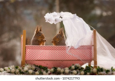 red squirrels in an wedding bed