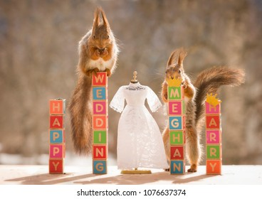 red squirrels  with  a wedding text and a wedding dress