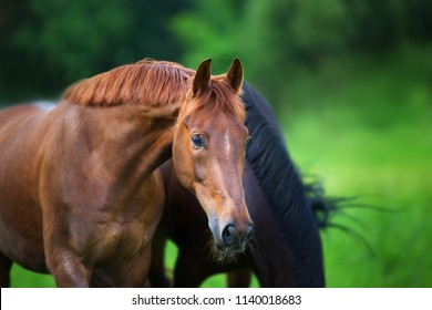 Red stallion close up portrait in spring green landscape
