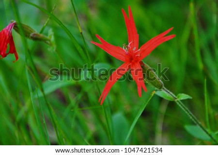 Red Star Shaped Fire Pink Blossom Stock Photo Edit Now 1047421534