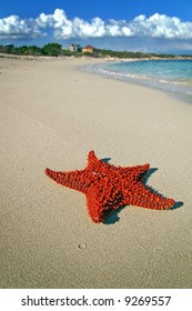 red starfish on a beach