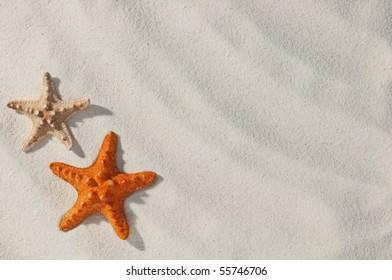 red starfish on sand close up