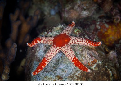 Red Starfish on the Sea Rock Underwater photo Philippines