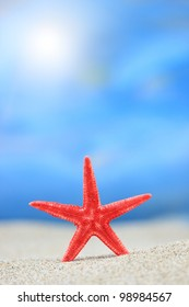 Red starfish in the sand on the beach