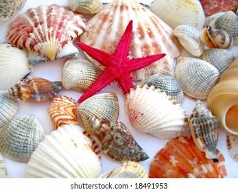 red starfish and seashells