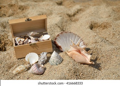 Red starfish and lot of seashells in wooden chest and around it, on sandy beach