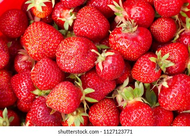 red strawberries background sweet organic fruits