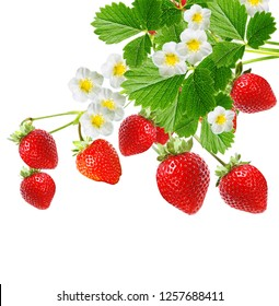 red strawberries on white