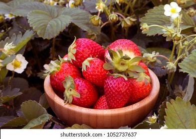 Red strawberries in a wooden box in a field