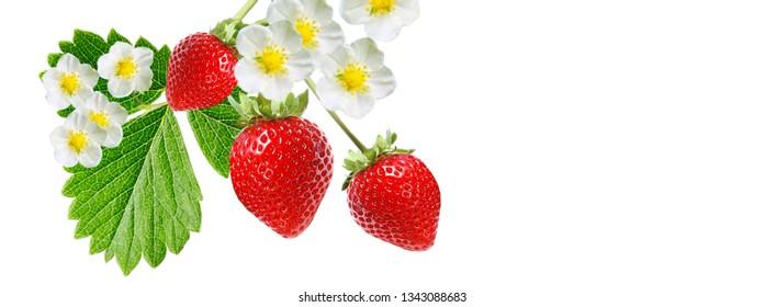 red strawberry fresh