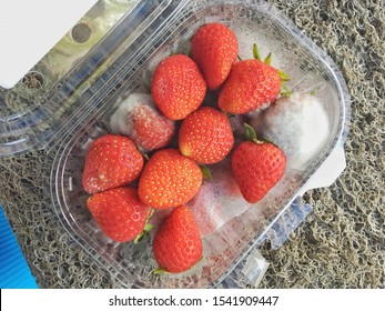 Red strawberry fruits spoilage (moldy food) has white fuzzy spots caused by mold (mould) which is fungus in form of multicellular filaments called hyphae that produce harmful toxins has bad effect