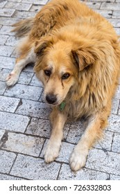 Red stray dog in Athens