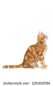 red striped kitten in front of white