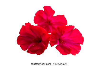 red summer flowers isolated on white background