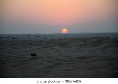 Red sun set in sand dune desert