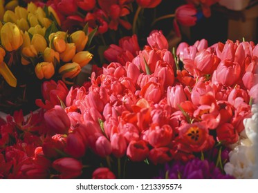 Red sunkissed flowers