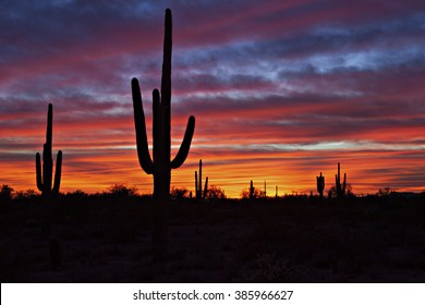 Red sunset in Arizona,with Saguaro silhouette.
